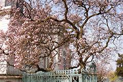 4. Wandelkonzert - Frühlingskonzert – Ein Streifzug durch die barocke Vogelwelt